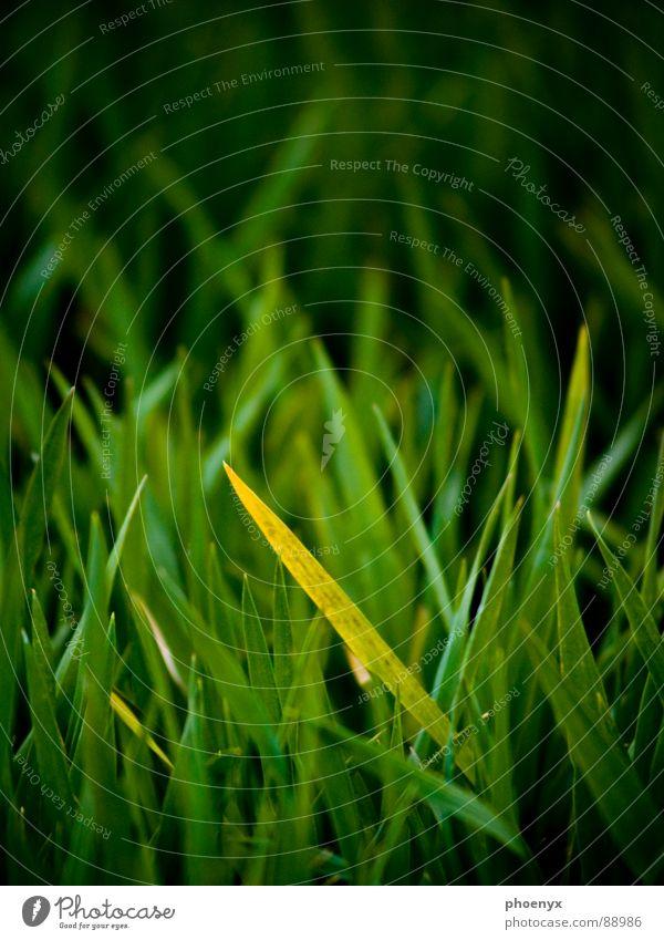 Da versteckt sich doch einer .... grün gelb Wiese Gras Feld Bodenbelag Amerika verstecken Isolierung (Material) grün-gelb