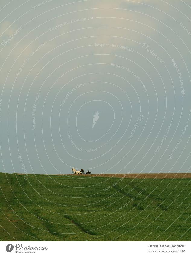 1 PS Wolken Wiese Feld Horizont Pferd Pferdekutsche Frühling Ausritt kutschieren Säugetier Himmel Schimmelpilze Pferdestärke Reitsport