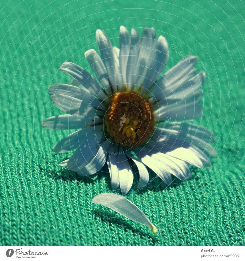 lazydaisy Gänseblümchen Schatten Blume Blüte gelb weiß Margerite grün Stoff Material mehrfarbig diagonal ausgerissen zupfen Zerreißen Bekleidung Freude