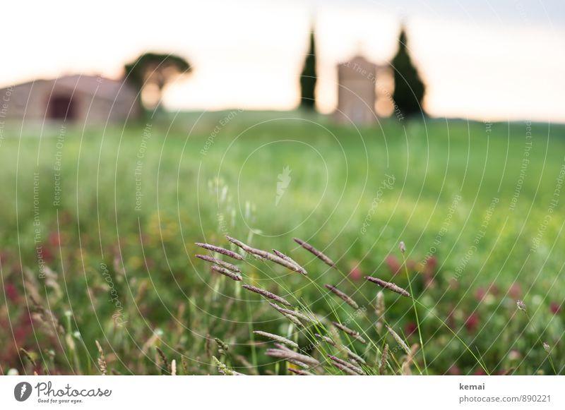 Wegesrand Ferien & Urlaub & Reisen Ausflug Toskana Italien Umwelt Natur Landschaft Pflanze Sonnenaufgang Sonnenuntergang Sommer Schönes Wetter Gras Blüte