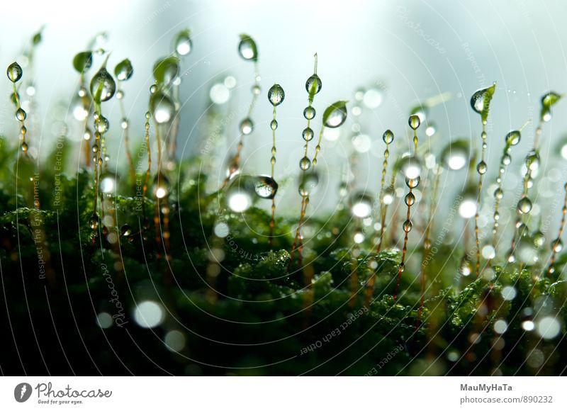 Natur Pflanze Wasser Wald Berge u. Gebirge Gefühle Herbst Glück Garten Horizont Felsen träumen Luft Park Regen Feld