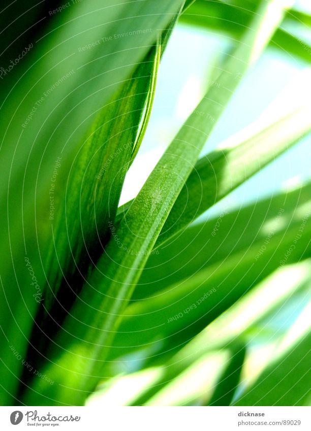 From an Ant´s point of view...vol.02 Ameise Unschärfe Gras Halm Lebensraum Frühling grün Muster Wiese klein winzig verringern verwandeln Perspektive