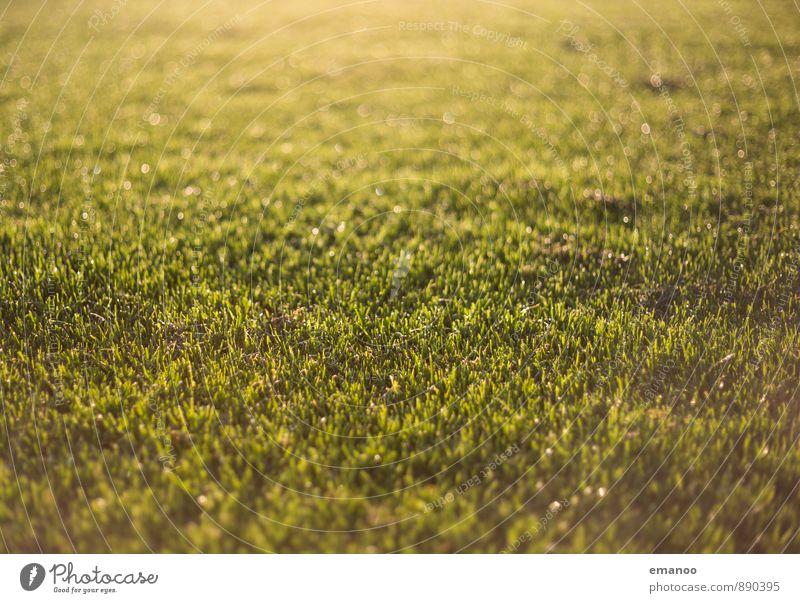Regenrasen Natur Landschaft Pflanze Wasser Sonnenlicht Frühling Sommer Klima Wetter Schönes Wetter Gras Garten Park Wiese weich gold grün rasenmähen feucht nass