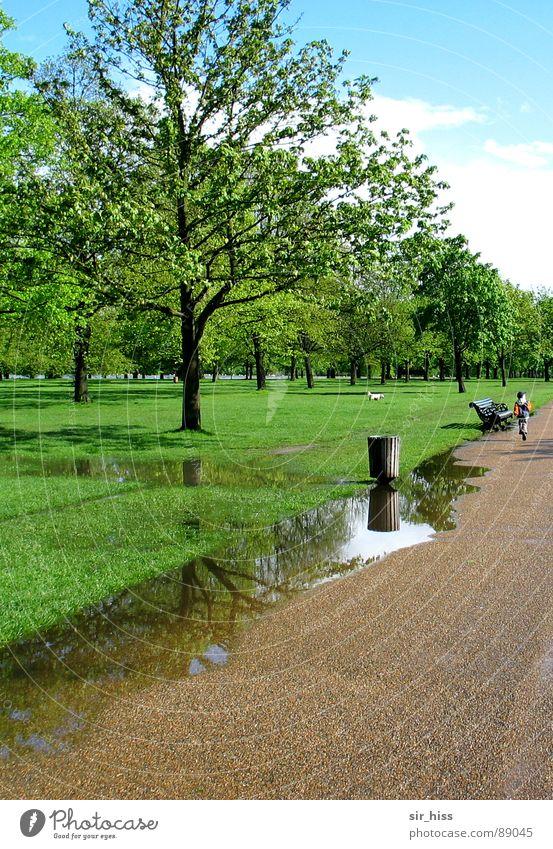 parking lane @ Hyde Park Kind Wasser Baum grün Ferien & Urlaub & Reisen Erholung Wiese Frühling Garten Regen Luft Spaziergang atmen England Pfütze