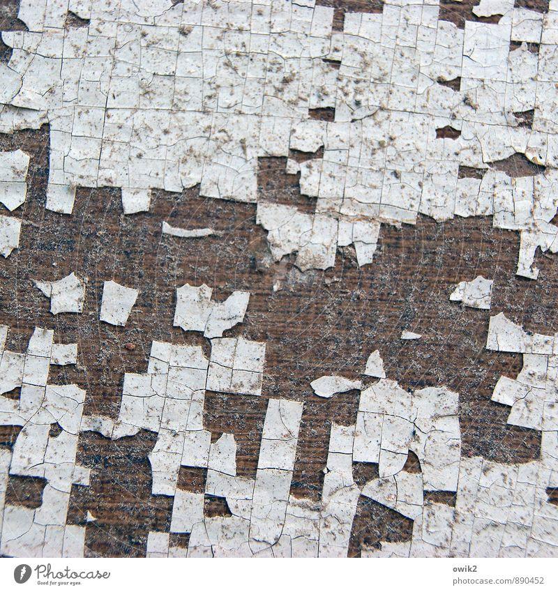 Blätterteig alt klein dreckig authentisch verrückt Vergänglichkeit trocken dünn nah Teile u. Stücke verfallen Verfall trashig bizarr Zerstörung