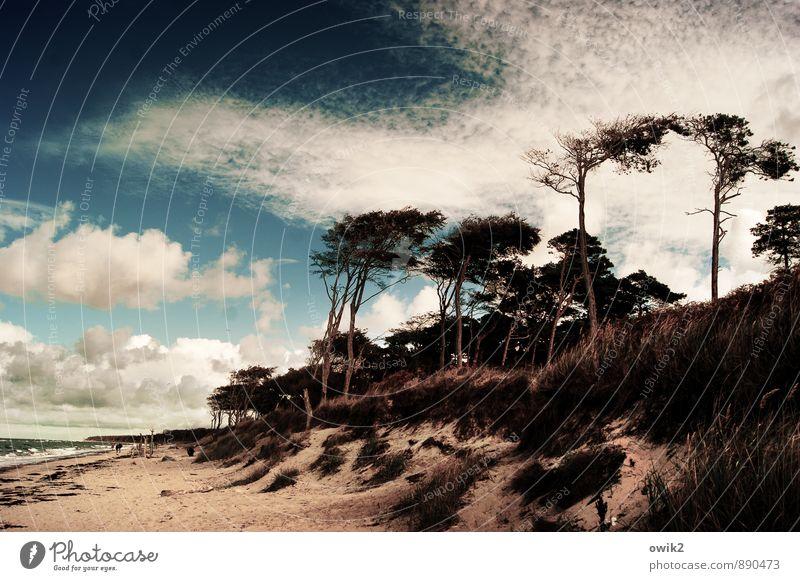 Fußgängerzone Mensch Menschengruppe Umwelt Natur Landschaft Pflanze Himmel Wolken Klima Wetter Schönes Wetter Baum Gras Sträucher Strand Ostsee Weststrand