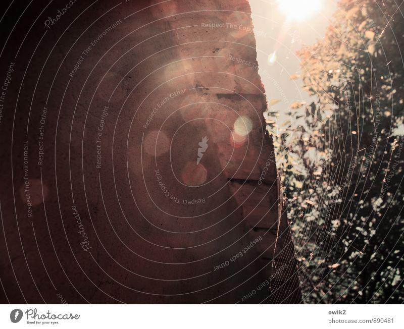 Im Garten Himmel Natur Pflanze Sommer Sonne Baum Blatt Tier Umwelt Wand Mauer Glück hell glänzend Wetter leuchten