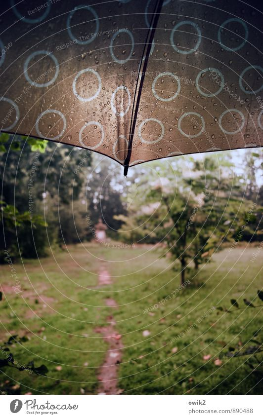 Peace | Es pieselt schon wieder Umwelt Natur Landschaft Pflanze Sommer Klimawandel schlechtes Wetter Regen Baum Gras Grünpflanze Park Wiese Wege & Pfade