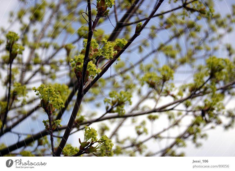 Frühlingslaune Natur Himmel Baum grün ruhig Blüte Luft Ast Blühend