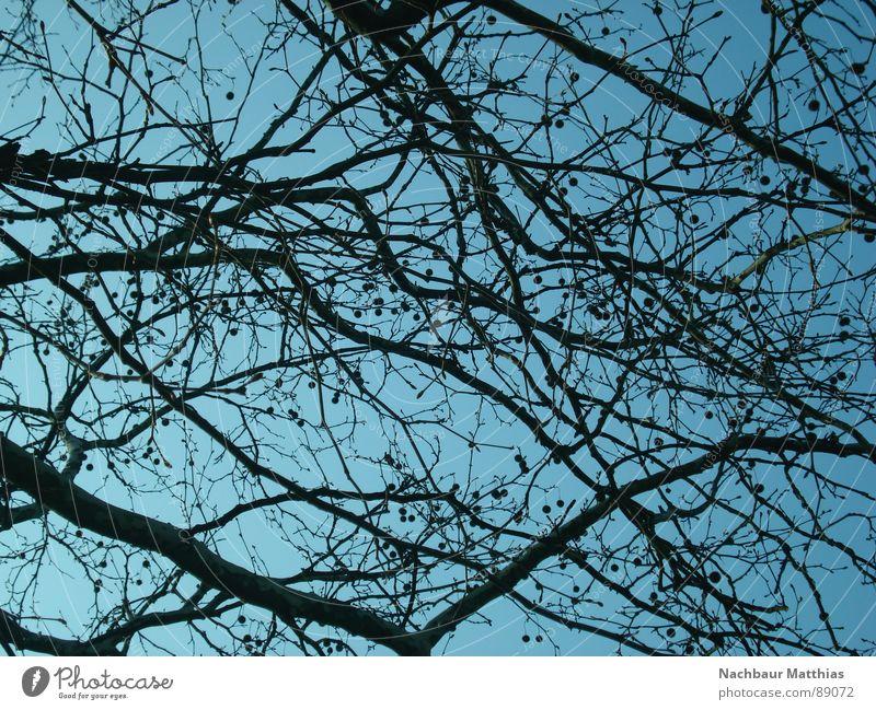 punkt für punkt Baum durcheinander chaotisch Sommer Frühling Ast Himmel blau verästelt Natur