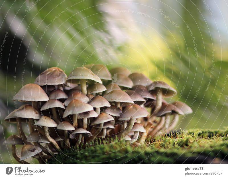 Mushrooms Natur Erde Herbst Moos Pilz Pilzhut Wald schön braun gelb grün Glück Zufriedenheit ruhig Erholung Wachstum Gruppenfoto gruppiert Zusammensein Farbfoto