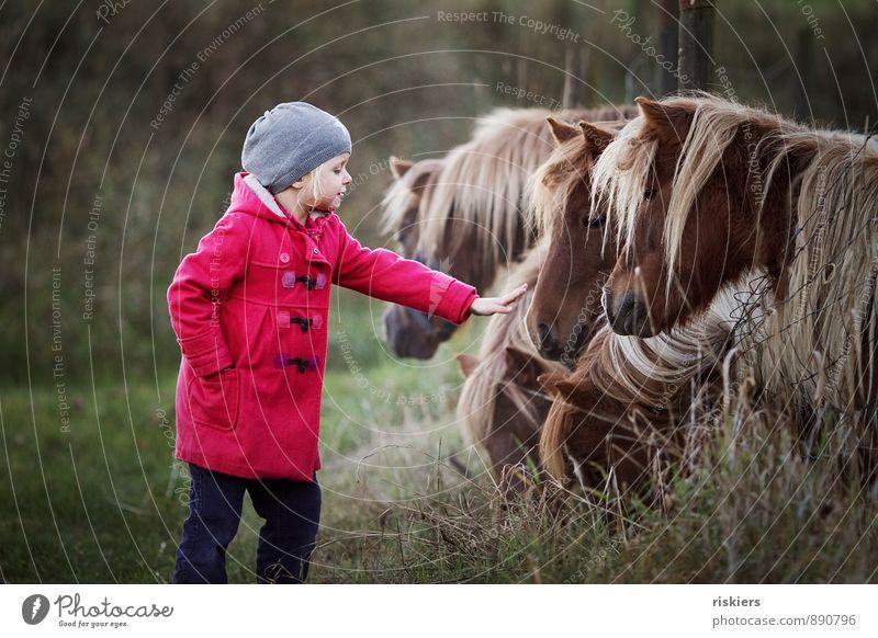 das leben ist ein ponyhof ;) Mensch Kind Erholung rot Mädchen Tier Herbst natürlich Freundschaft träumen Zufriedenheit Kindheit Lächeln beobachten Tiergruppe