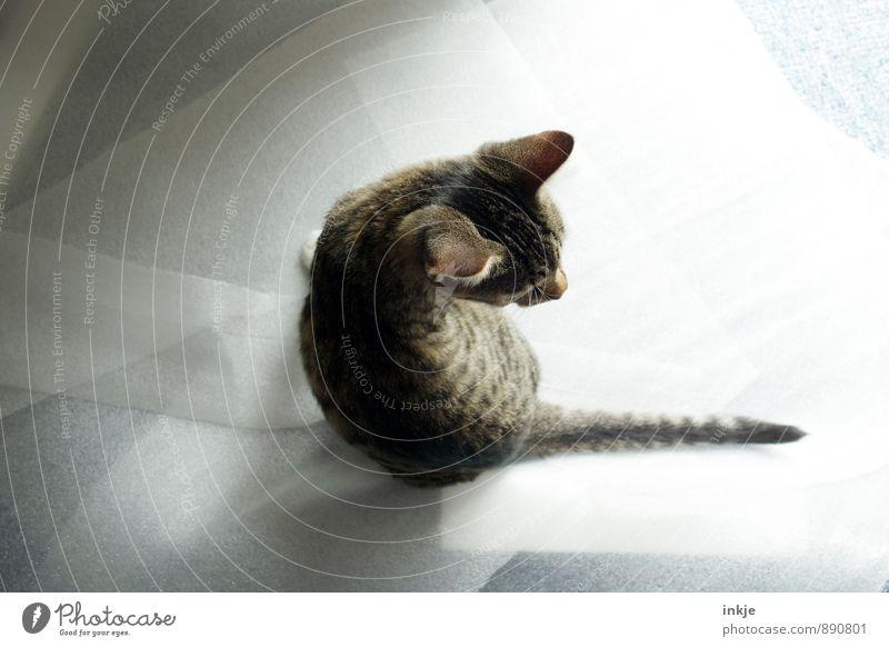 U-Turn Haustier Katze 1 Tier Tierjunges hocken hell klein niedlich drehen rückwärts Zurückblicken Farbfoto Innenaufnahme Nahaufnahme Menschenleer