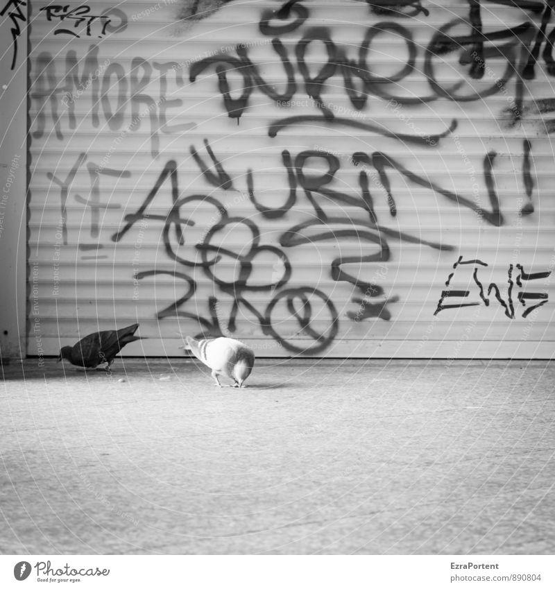 Liebe/Tauben/Ausscheidung Lifestyle Stil Bahnhof Tor Tier Wildtier 2 Tierpaar Zeichen Schriftzeichen Graffiti Fressen schwarz weiß durcheinander Urin Amore Wort