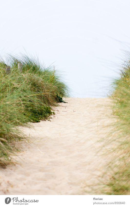 hinüber zum meer II/III Natur Ferien & Urlaub & Reisen schön grün Sommer Meer Landschaft Strand Ferne Umwelt Gefühle Küste Wege & Pfade Freiheit Sand Angst