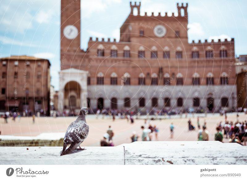 Vogelperspektive Ferien & Urlaub & Reisen Tourismus Ausflug Abenteuer Sightseeing Städtereise Siena Stadt Palast Platz Marktplatz Turm Bauwerk Gebäude