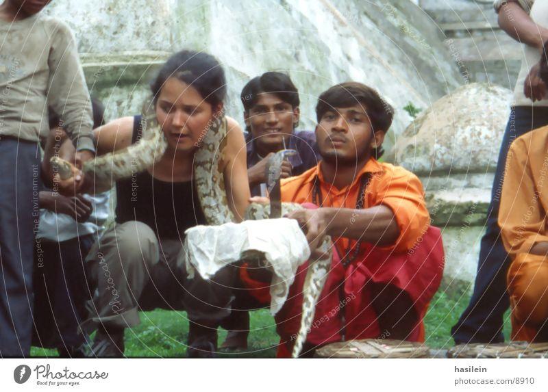 schlangenbeschwörung Frau Indien Ferien & Urlaub & Reisen gefährlich Schlange bedrohlich zähmen