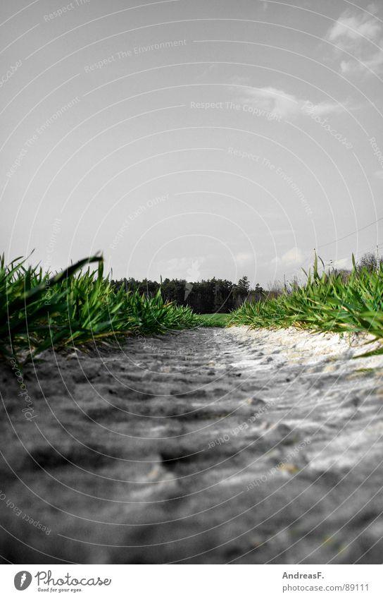 blühende Landschaften grün Pflanze Wiese Gras Feld dreckig Erde frisch Bodenbelag liegen Spuren Getreide Landwirtschaft Froschperspektive Ackerbau Blauer Himmel
