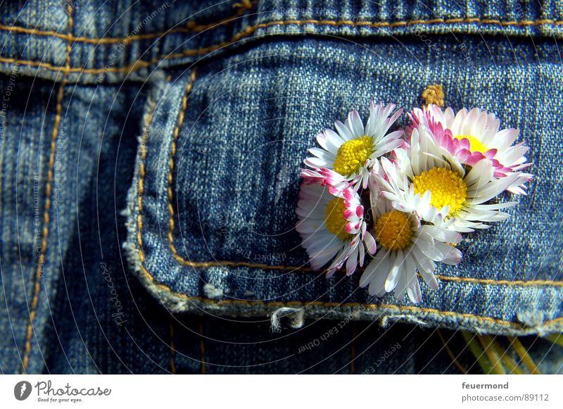 bouquet Gänseblümchen Jeansjacke Blume Frühling Sommer sommerlich Jacke Knopfloch Schmuck Knöpfe verschönern Blüte springen Jeanshose Schönes Wetter summery sun