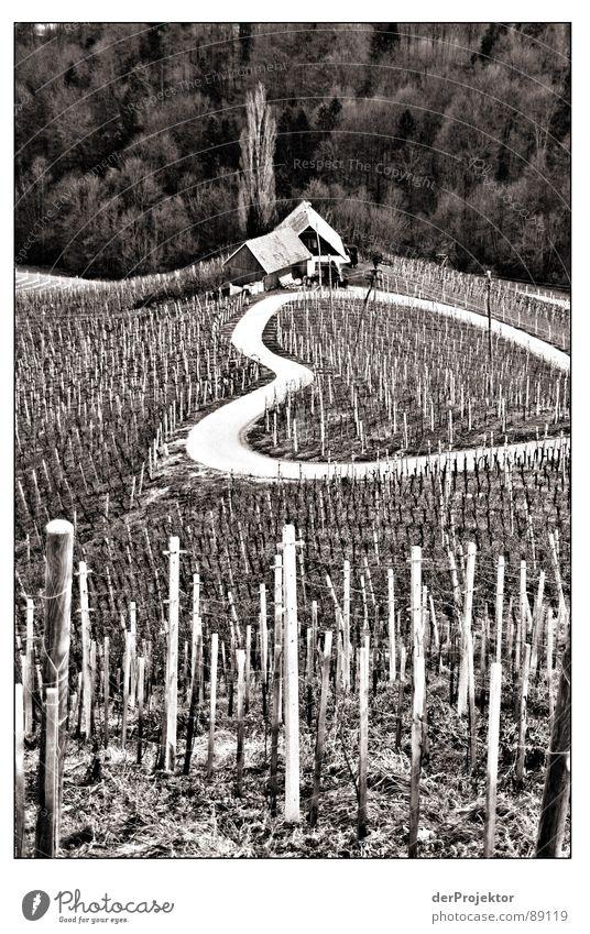 Straße der Liebe Winter Herz Wein Schmerz Nostalgie Weinberg Landwirtschaft Januar Weinbau Slowenien