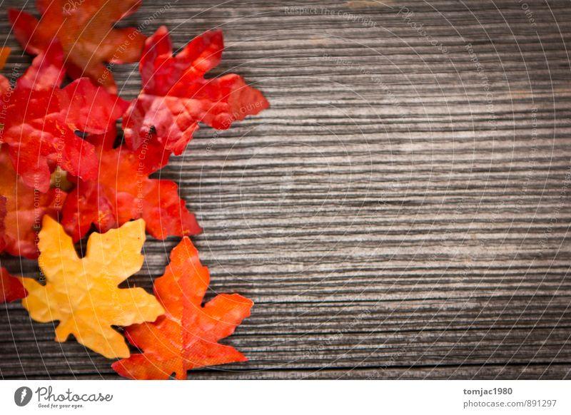 Laub auf Holzhintergrund Natur Pflanze Blatt Herbst Hintergrundbild braun Dekoration & Verzierung Pause harmonisch Meditation Herbstlaub herbstlich