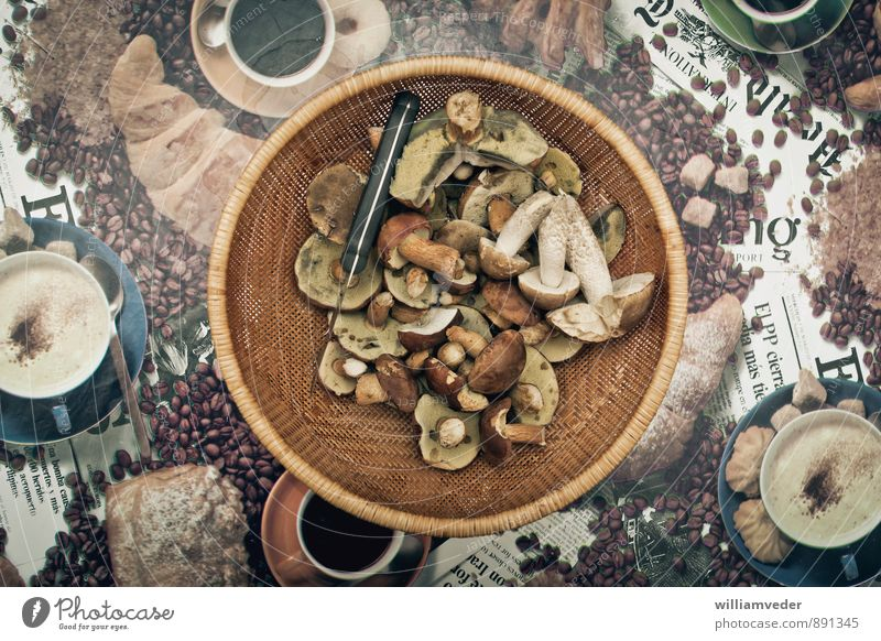 Korb mit gesammelten Pilzen Natur Ferien & Urlaub & Reisen Pflanze gelb natürlich Freiheit braun Freizeit & Hobby wild gold Ausflug Ernährung Abenteuer Pilz nachhaltig Pilzsucher
