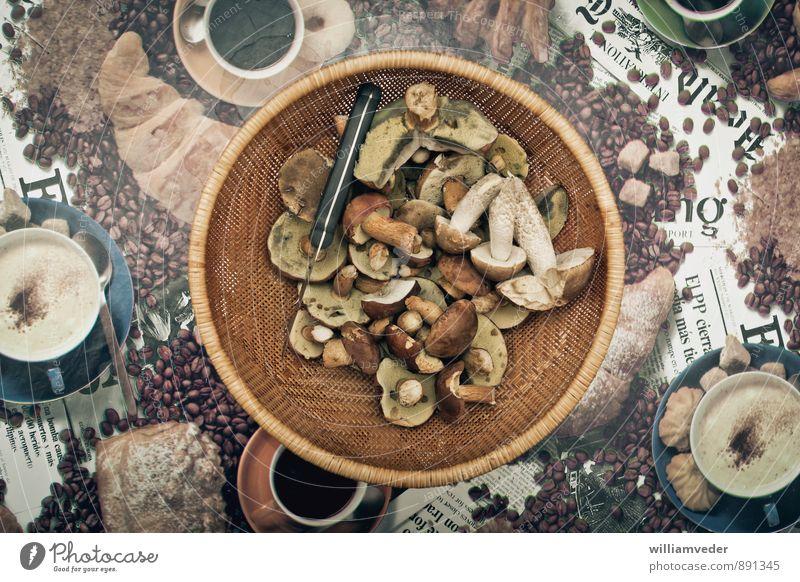 Korb mit gesammelten Pilzen Natur Ferien & Urlaub & Reisen Pflanze gelb natürlich Freiheit braun Freizeit & Hobby wild gold Ausflug Ernährung Abenteuer
