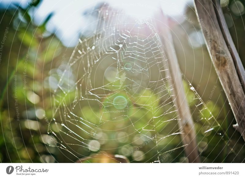 Spinnennetz im Gegenlicht Natur Pflanze grün weiß Sommer Wald Umwelt gelb Senior feminin träumen gold wandern Vergangenheit