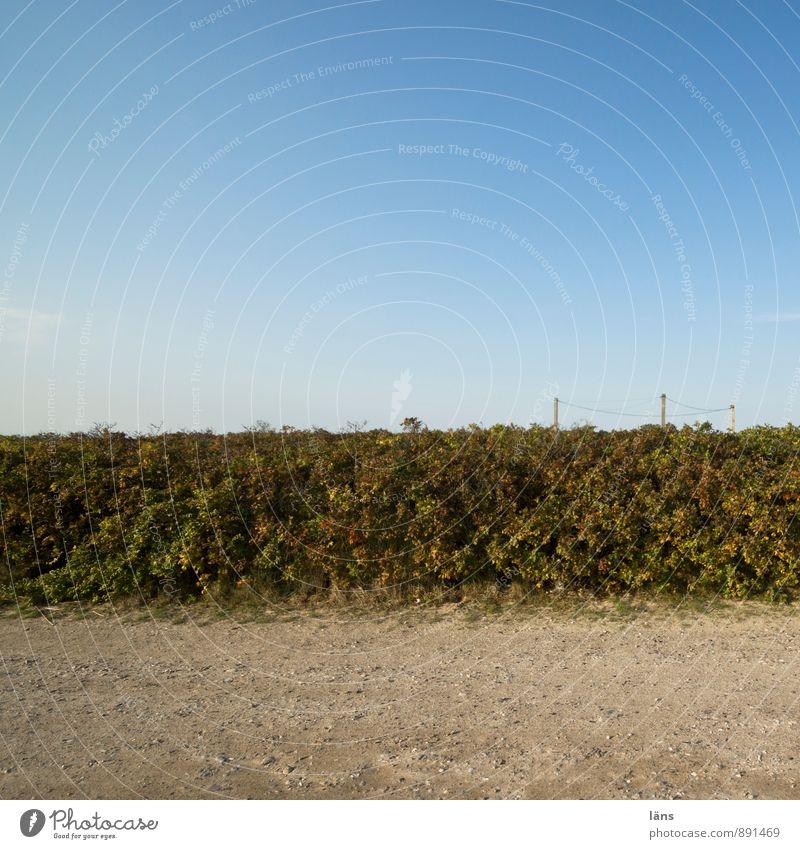 unbestückt Ausflug Freiheit Umwelt Natur Sand Himmel Wolkenloser Himmel Sommer Sträucher Grünpflanze Wildpflanze Verkehrswege Wege & Pfade Wachstum Sandweg