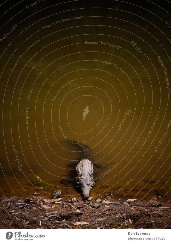 Katherine Gorge Natur Tier Umwelt liegen Angst wild warten gefährlich Ausflug bedrohlich beobachten Abenteuer Seeufer Todesangst Jagd exotisch