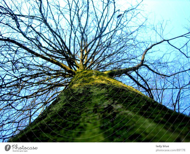 Aufblick Baum Frühling groß grün Holz Umwelt ruhig Kraft Himmel blau Natur Größe Energiewirtschaft hoch Blauer Himmel blue Haare & Frisuren Schönes Wetter Ast