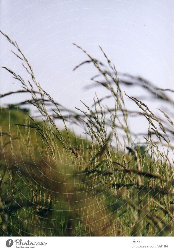 Weide Frühling grün Wiese Halm Blauer Himmel Freiheit Natur Wind