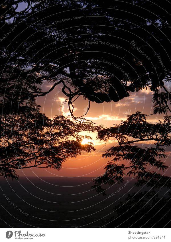 Einklang Natur Landschaft Sonne Sonnenaufgang Sonnenuntergang Schönes Wetter Wärme Baum leuchten kuschlig natürlich gelb orange rot Reinheit Hoffnung Trauer