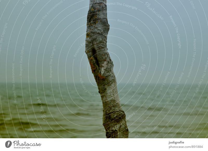 Weststrand Himmel Natur Pflanze Wasser Baum Landschaft Strand Umwelt Küste natürlich wild Klima Ostsee Wolkenloser Himmel