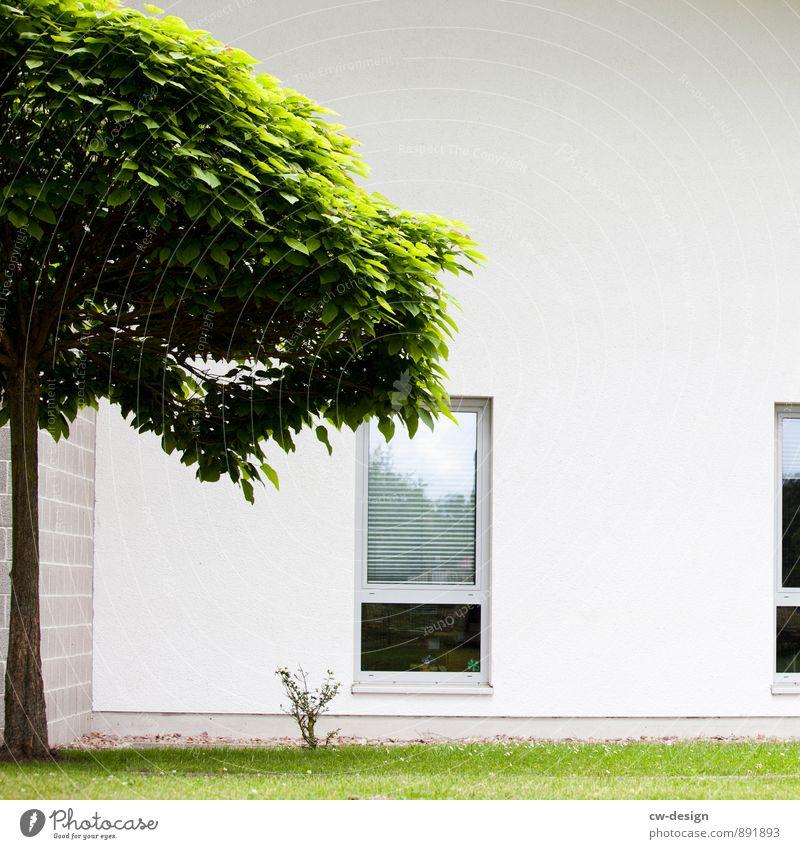 Moderne Architektur Umwelt Natur Schönes Wetter Baum Gras Garten Kleinstadt Stadt Menschenleer Haus Bauwerk Gebäude Mauer Wand Fassade Fenster hell trendy kalt