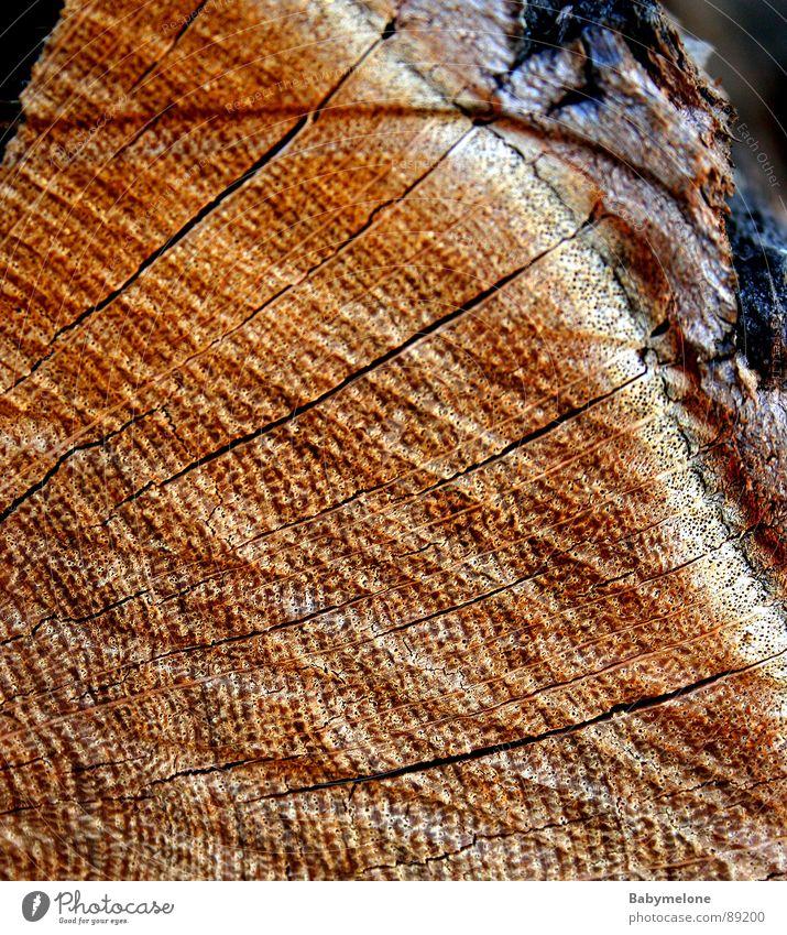 Natur Pur Holz Baum Muster Baumrinde Baumstamm braun Linie