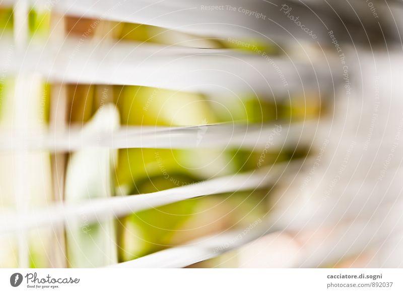 In Fensternähe Innenarchitektur Dekoration & Verzierung Jalousie Umwelt Pflanze Schönes Wetter Blatt Grünpflanze Topfpflanze Linie frei hell nah Neugier grau