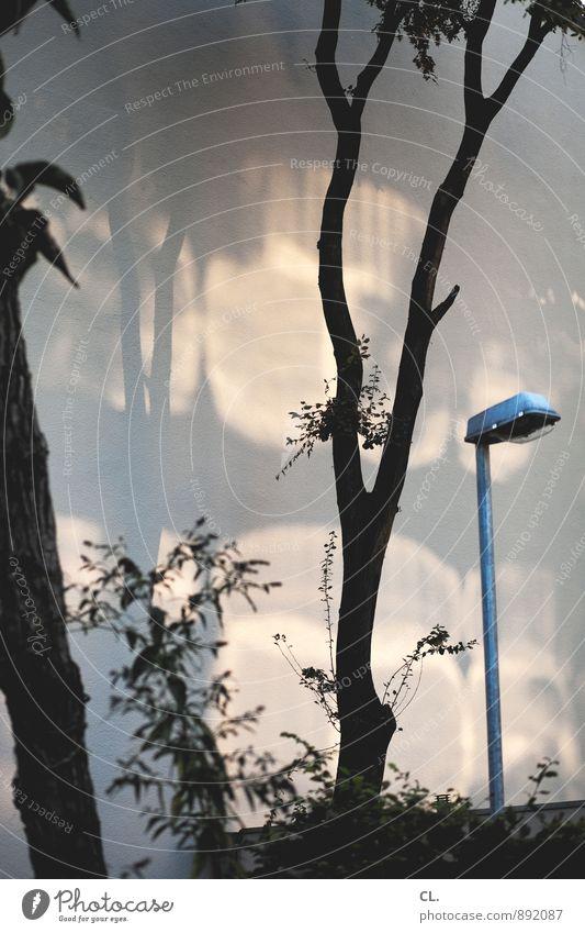 lichtspiel Umwelt Natur Schönes Wetter Baum Sträucher Laternenpfahl Straßenbeleuchtung ästhetisch Farbfoto Gedeckte Farben Außenaufnahme Menschenleer Tag Licht