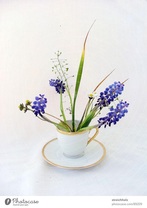 ein Tässchen Frühling grün Gras Arbeit & Erwerbstätigkeit Design frisch verrückt Wachstum neu Hoffnung Klarheit Tasse skurril Tulpe Optimismus Agentur