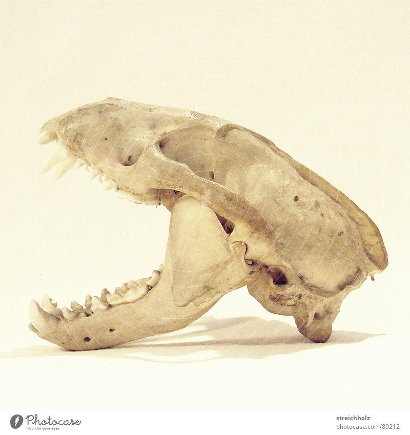 Die Realität endete hier Natur Tier Leben Tod Trauer Vergangenheit Säugetier Verschiedenheit hart Tierschädel Wildnis Naturgesetz
