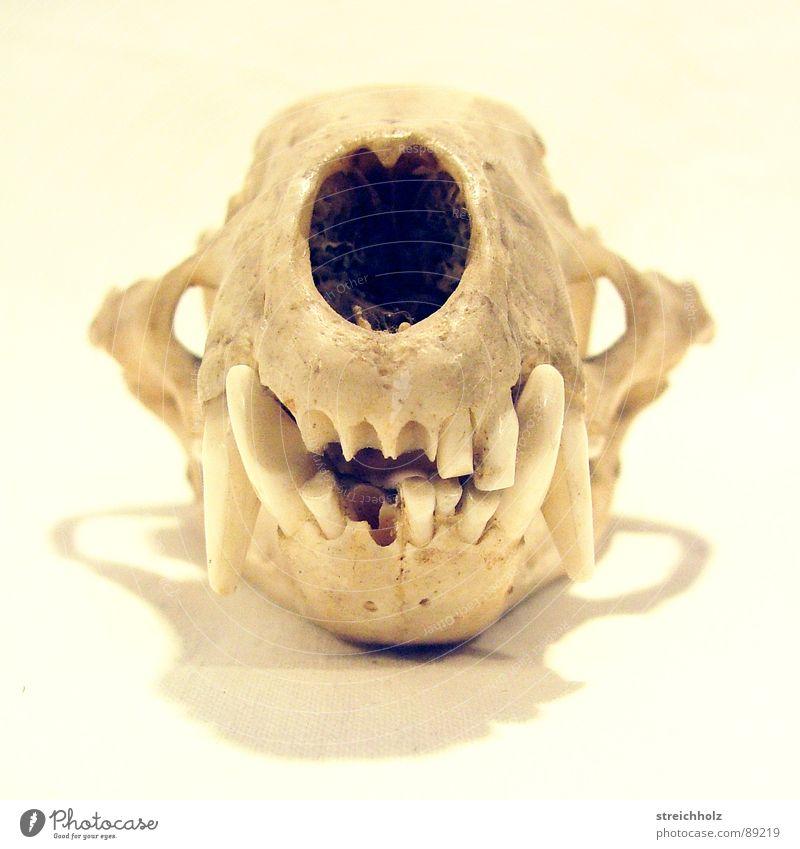Die Realität endete hier II Natur Tier Leben Tod Trauer Vergangenheit Säugetier Verschiedenheit hart Tierschädel Wildnis Naturgesetz