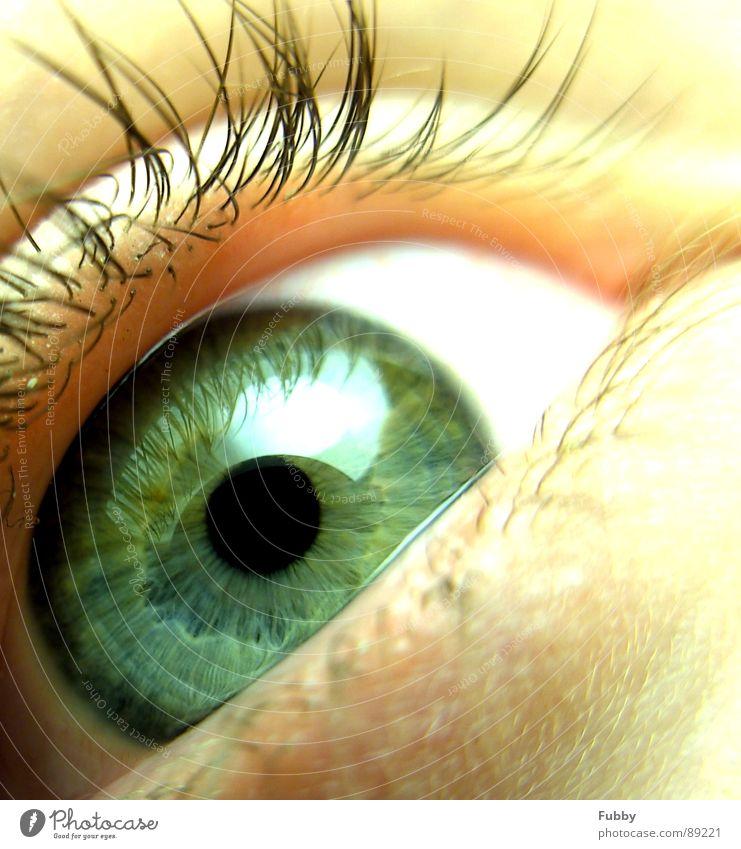 Augenblick Wimpern Pupille grün Aussehen Mensch schön Makroaufnahme Nahaufnahme Gesicht eye face