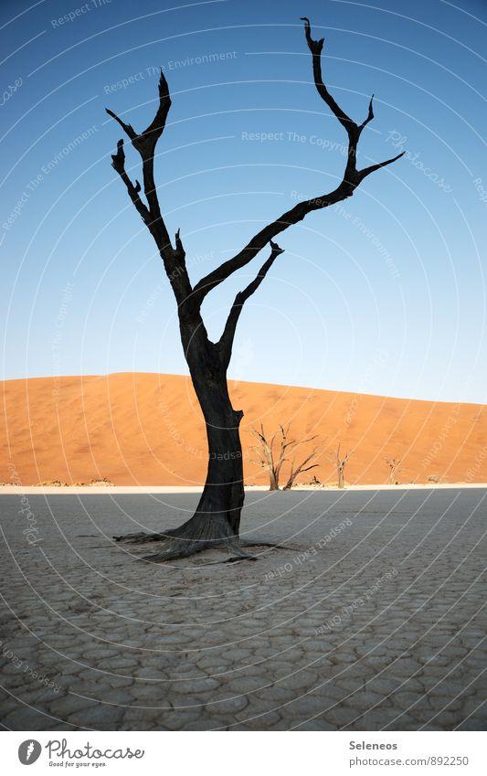 letztes Strecken Natur Ferien & Urlaub & Reisen Pflanze Sommer Sonne Baum Landschaft Ferne Umwelt Freiheit Sand Horizont Tourismus Ausflug Schönes Wetter
