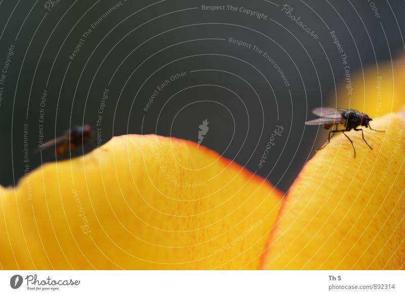 Fliege Natur Pflanze Sommer Blüte Tier Blühend entdecken ästhetisch Duft einfach elegant natürlich Farbe Gelassenheit Idylle einzigartig ruhig harmonisch schön