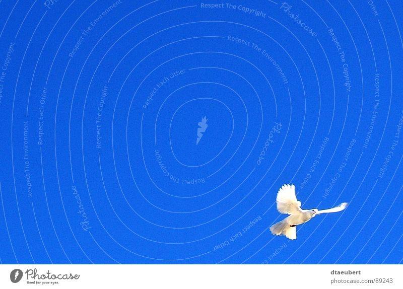 The Holy Spirit Himmel blau weiß Tier Bewegung natürlich Religion & Glaube Feste & Feiern Freiheit außergewöhnlich fliegen Vogel ästhetisch Sauberkeit