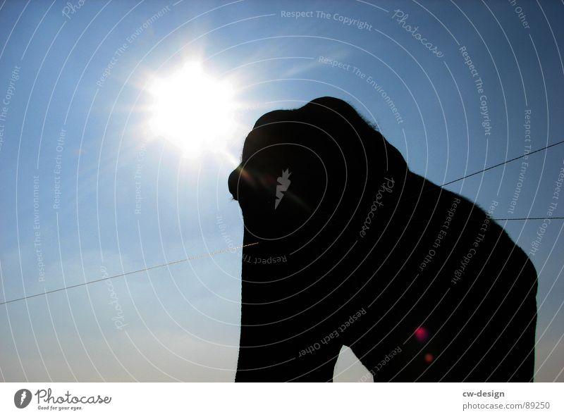 *elefantenKNUTschen ist modern* Himmel weiß Sonne Tier Traurigkeit Gras grau groß hoch Nase Macht Trauer Ohr Halm Geruch Säugetier