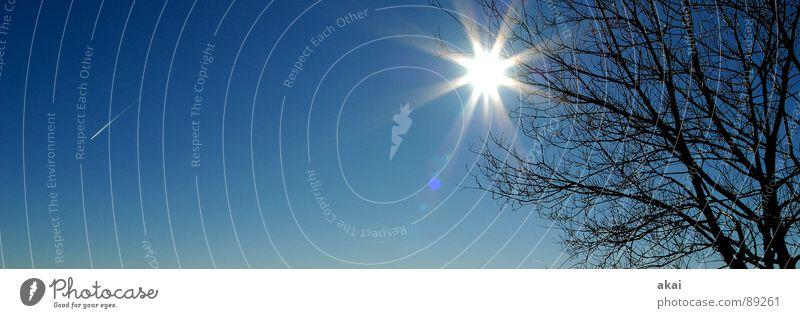 Oh Himmel ! Linie Flugzeug Luftverkehr Perspektive Paradies Geometrie Standort himmelblau Waldlichtung Kondensstreifen Laubbaum Nadelwald Himmelszelt Waldwiese