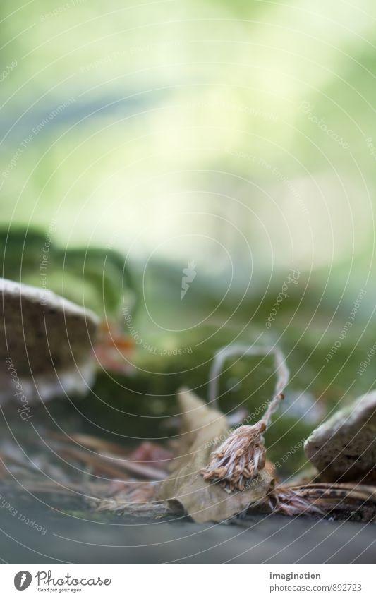 Wabi Sabi Pflanze Herbst Blatt Blüte Wald alt Wachstum trocken braun grün Gelassenheit geduldig demütig Traurigkeit Trauer Tod Schmerz Enttäuschung Einsamkeit