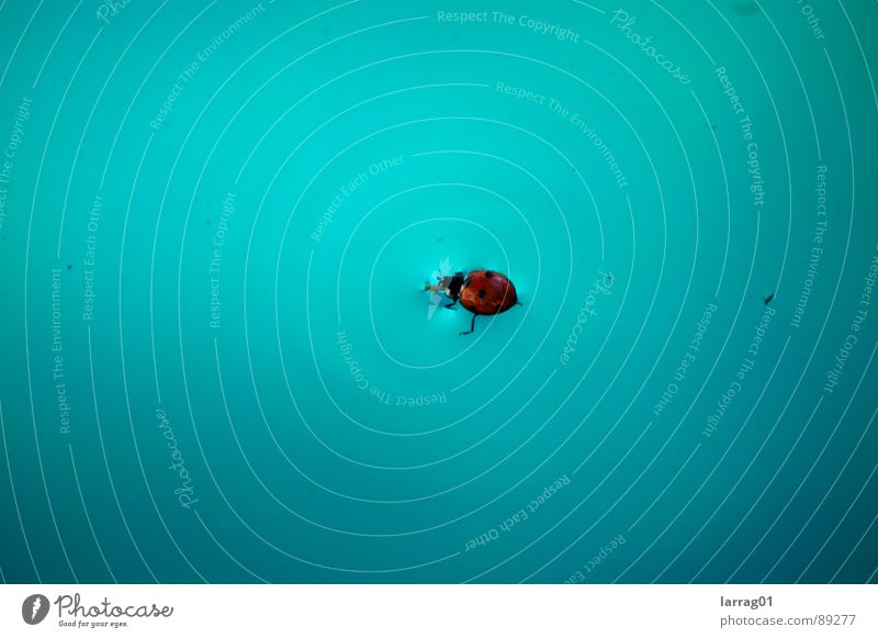 Insekt im Pool Natur Wasser blau Käfer Frühling orange Angst fliegen Schwimmbad Insekt Punkt türkis Spanien Desaster Panik Marienkäfer