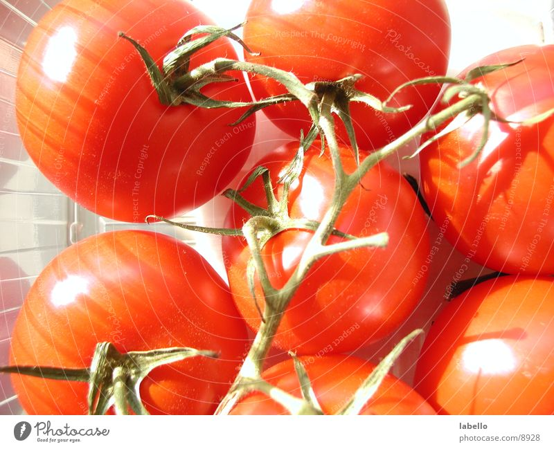 strahlende Tomätchen Nachtschattengewächse Küche Gesundheit Tomate mit Ästen Strauchtomate helles Licht Schönes Wetter